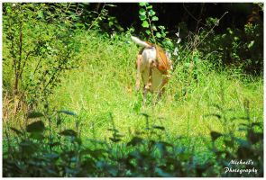 The South End Of A North Bound Deer! by TheMan268