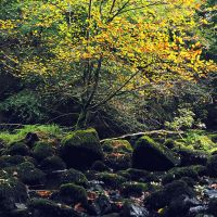 Agivey River in autumn IV by younghappy