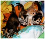 All 4 babies by Tepara