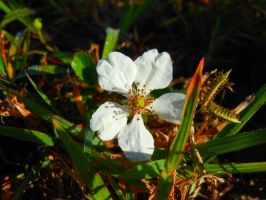 mini white flower by willow1894