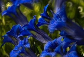 blurry bells of blue by artistmore