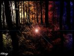 forest by Chefinlove