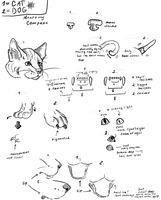 Cat vs. Dog: Anatomy Compare by clotus