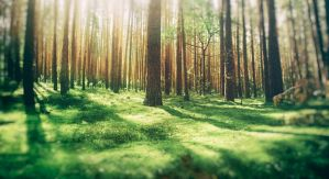 Green Forest of Blur by Binary-Map