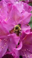 bee on a flower photo by crazydeadbunny