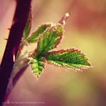 leaves by cloe-patra