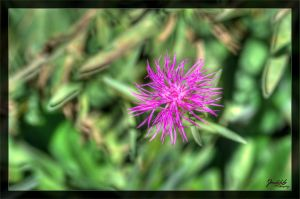 Pink by deaconfrost78