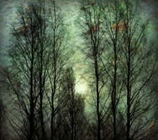 wind in the trees by i-see-faces