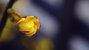 Yellow and Red by jorago
