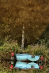 Birch and Boat ... by BobRock99