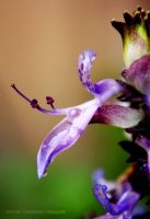 Purple Drop by Almirith7