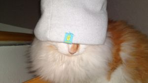 A cat in a hat by 95Nightgirl