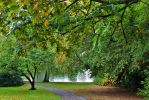 Trees by the Lake by cheese6623