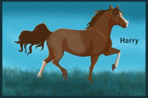 Harry the Horse by dyb