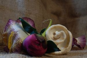 Shell and Flower Bud Still Life by Artlune
