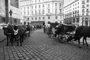 Horses in Vienna by Lad2-0