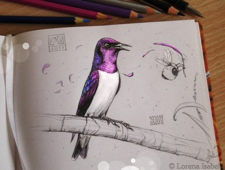 # 53 - Viloet backed Starling - by Loisa