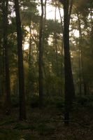 Woods at dawn 4 by steppeland