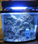 Fish Tank for sale by LilleahWest