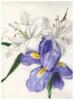iris and lilies by ChinMa