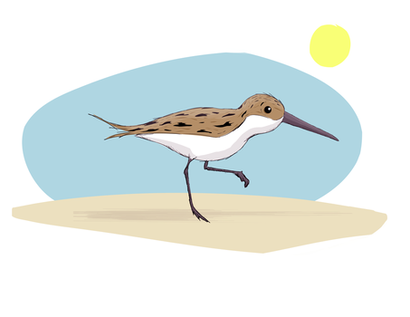 Sandpiper by Pencilly
