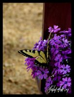 butterfly on flocks 6 by Famous-Panda