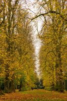 Lime Avenue by parallel-pam