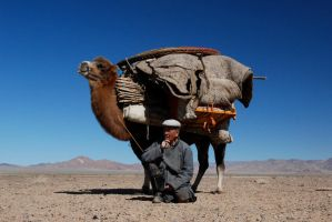 camel moves my home by blazur