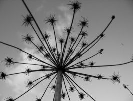 plant thing black and white 2 by hazellucy