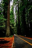 Avenue of the Giants by guvnaguy