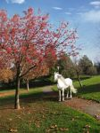 Park Pathway White Horse by plutoplus1