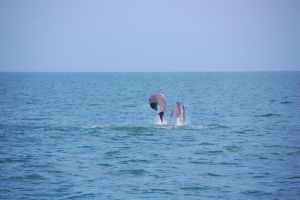 Dolphins by mycarisfaster