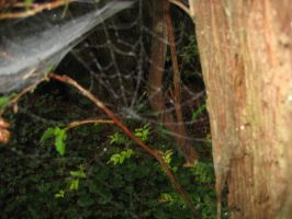 Spiderweb by lilyAlien