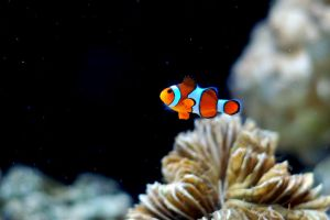 Finding Nemo by esee