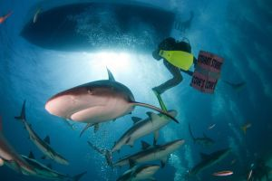 Reef Sharks by leighd
