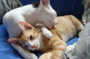 Brotherly Love by Fregatto