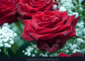Smell the Roses Preview I by kuschelirmel-stock