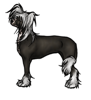 Chinese Crested by Rabastan