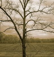 Lone tree, sepia.dA.img462 1 1 by harrietsfriend