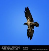 IMG_5120 by D3vilusion