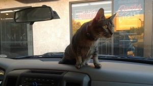 Kitty on the dash by Creepythecat