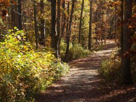 Path in the wood again by Irie-Stock