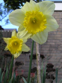 narcis by Ann4a
