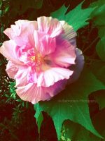 Paper flower by amplified27