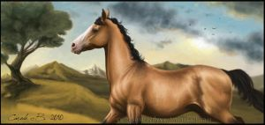 Akhal teke by XxRed-ButterflyxX