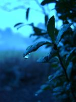 Raindrop by Laxitives