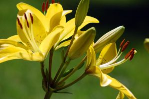 Yellow Flowers by jrbamberg