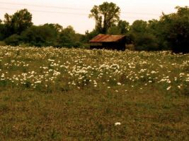 Field of Wildflowers and House by jobethlovess