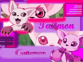 Tailmon Gatomon wallpaper by patamon-chan