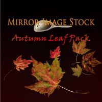 Leaf Pack by mirrorimagestock